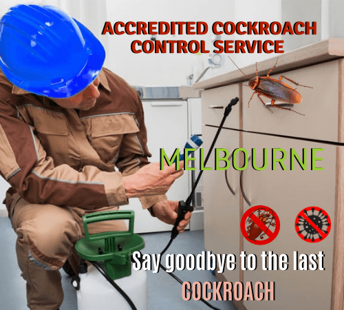 ACCREDITED Cockroach Control Service (1)
