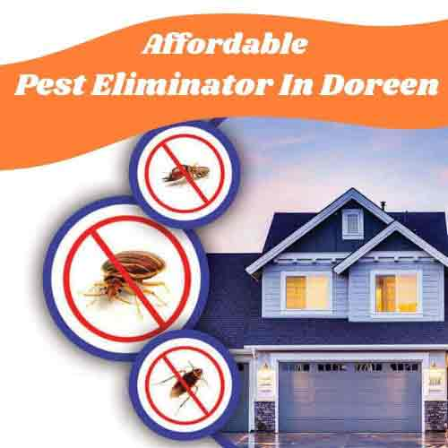 Affordable Pest Control Treatments In Doreen