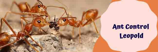 Ant ControlLeopold
