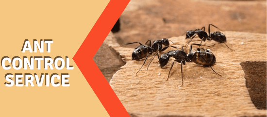 Ant Control Service-Marks Pest Control