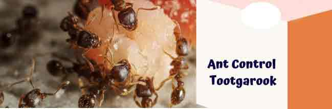 Ant ControlTootgarook