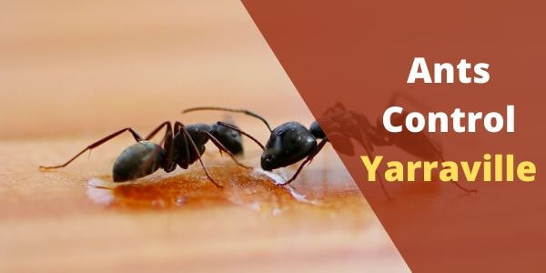 Ants control Yarraville