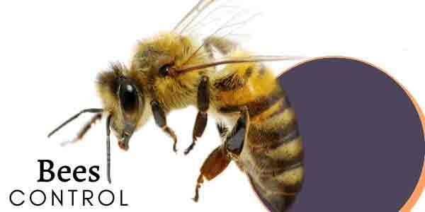Bees control Noble Park