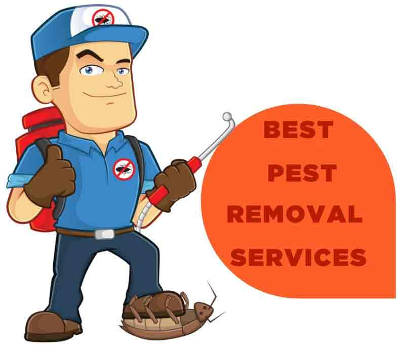 Marks Pest Control Tolmie