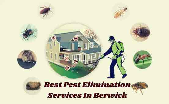 Best Pest Elimination Services In Berwick