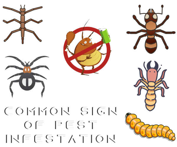 COMMON SIGN OF PEST INFESTATION