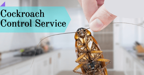 Cockroaches Control Service-Marks Pest Control