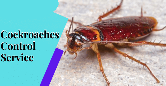 Cockroaches Control Service-Marks Pest Control Service