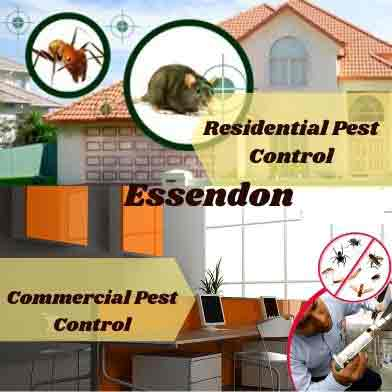 Commercial & Residential Pest Control Essendon