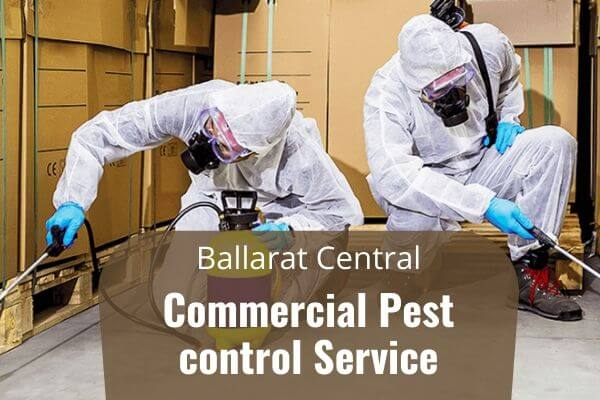Commercial pest control Ballarat Central