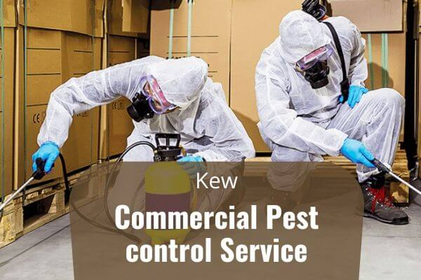 Commercial pest control Kew