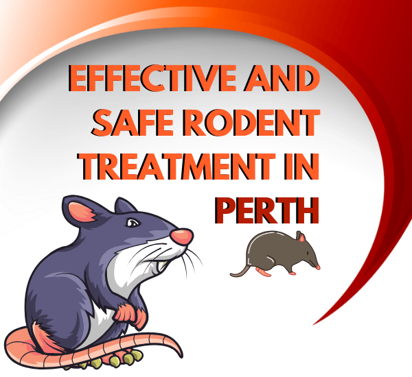 EFFECTIVE AND SAFE RODENT TREATMENT IN PERTH