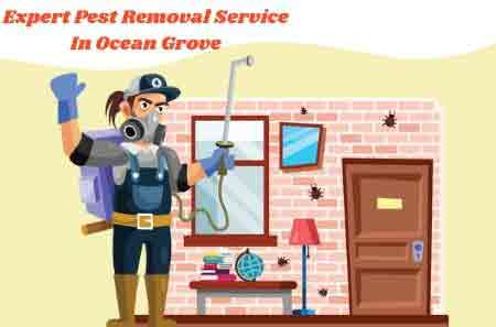Expert Pest Removal Service In Ocean Grove