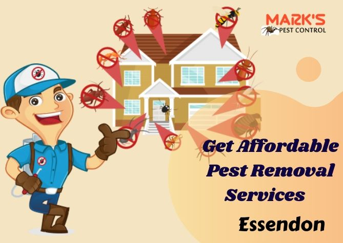 Get Affordable Pest Removal Services Essendon