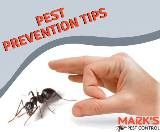 How to protect your property from pests-Marks Pest Control