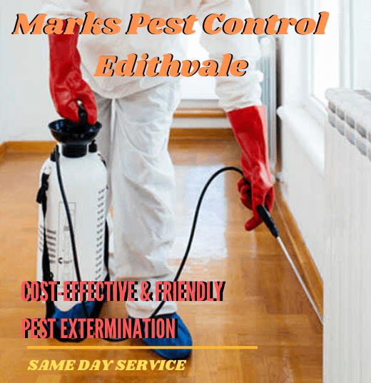 Cost-effective & friendly pest extermination