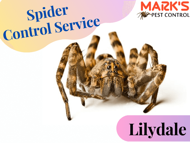 Marks Spider Control Service- Pest Control Lilydale