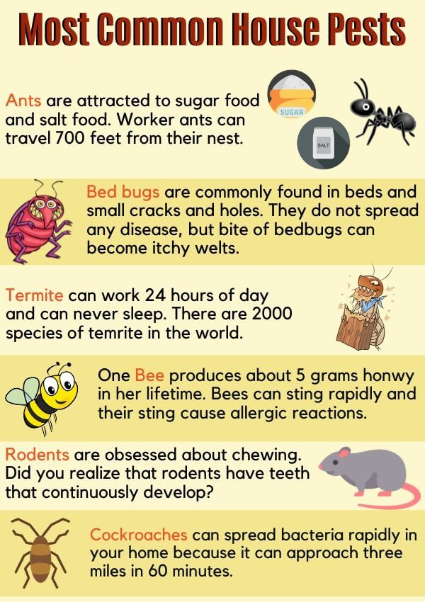 Most Common House Pests