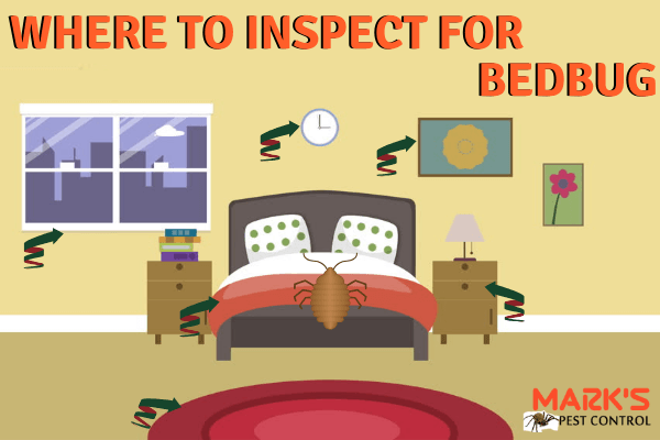 Most Common hiding places for bedbugs