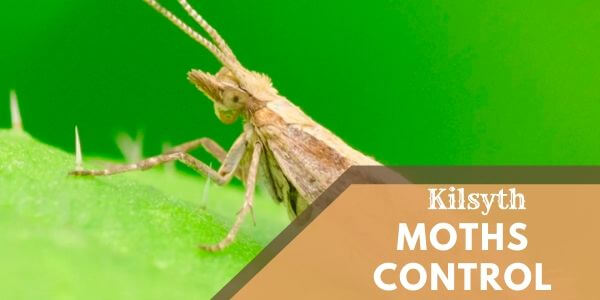 Moths control Kilsyth