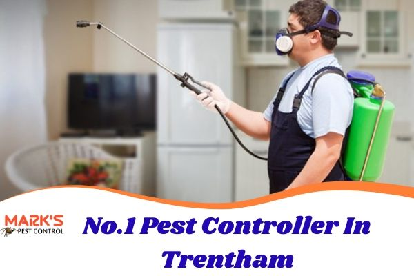 No.1 Pest Controller In Trentham
