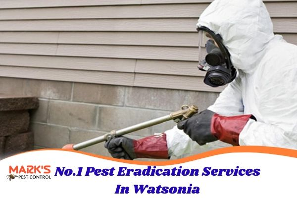 No.1 Pest Eradication Services In Watsonia
