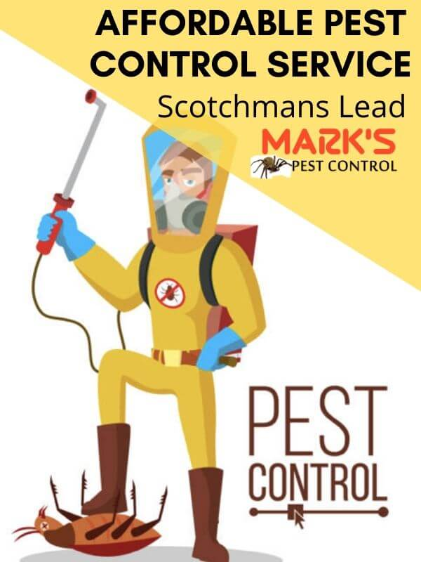 Pest Control Scotchmans Lead