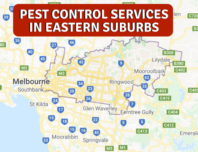 Pest Control Services in Eastern Suburbs