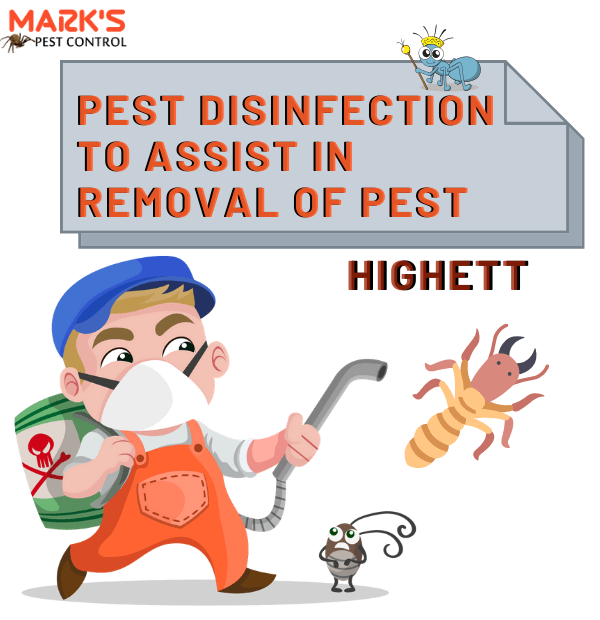 Pest Disinfection to Assist in Removal of Pest (1)