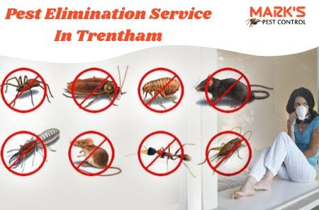 Pest Elimination Service In Trentham