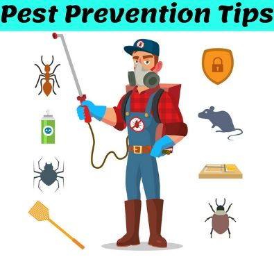 Cockroach Pest Control Services in Rye