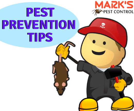 Pest Prevention Tips-Marks Pest Control