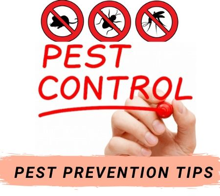 Pest Control Services in Armstrong Creek