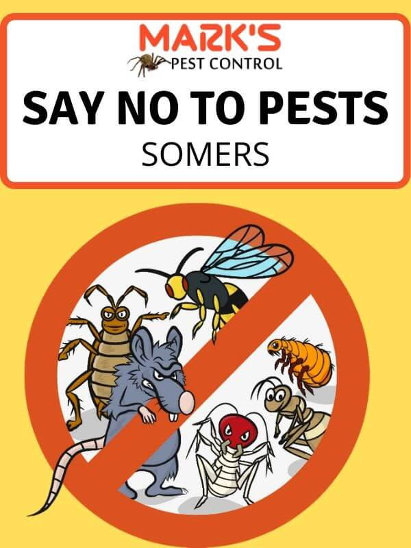 Pest Control Somers