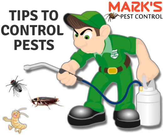 Pests prevention tips