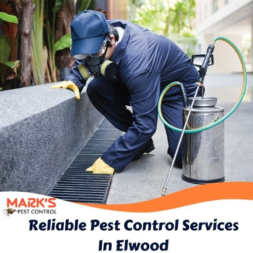 Reliable Pest Control Services In Elwood