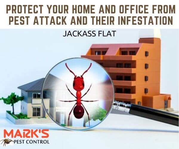 Residential and commercial pest control jackass Flat