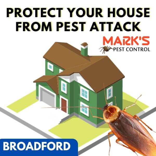 Residential pest control Broadford