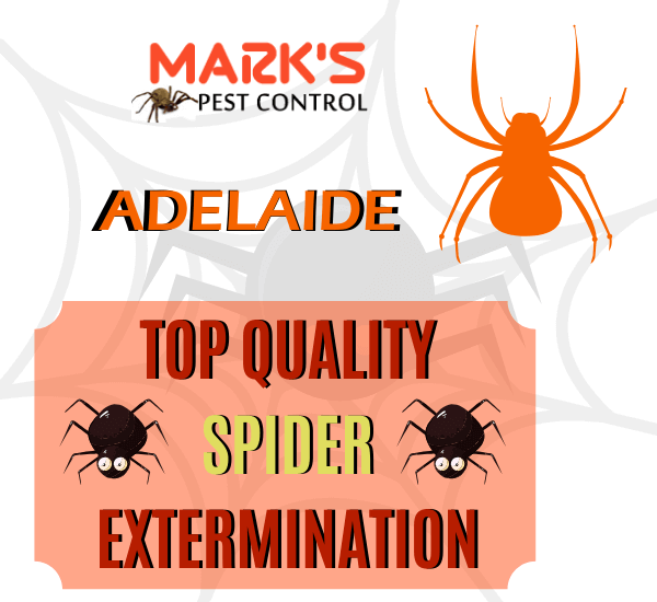 SPIDER CONTROL ADELAIDE