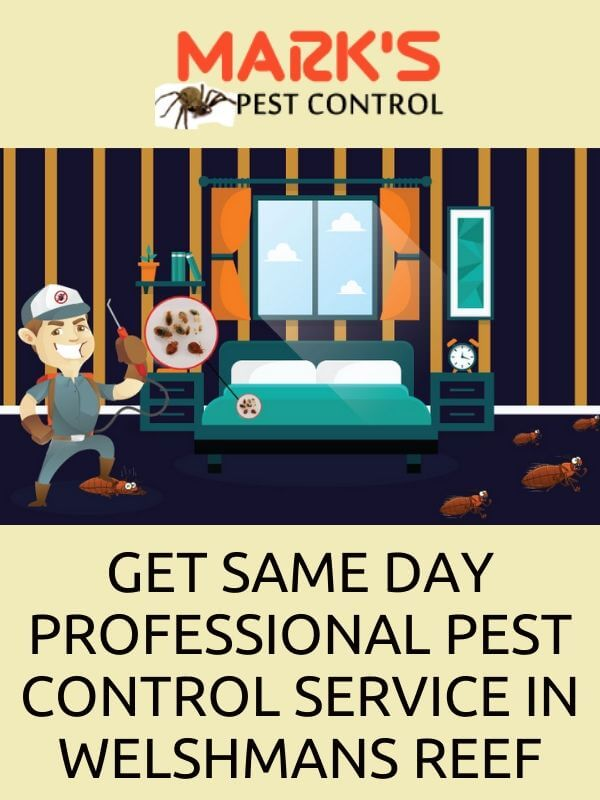 Same Day Pest Control Weshmans Reef