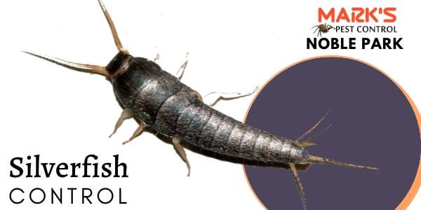 Silverfish control Noble Park