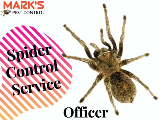 Spider Control Service- Marks Pest Control Officer