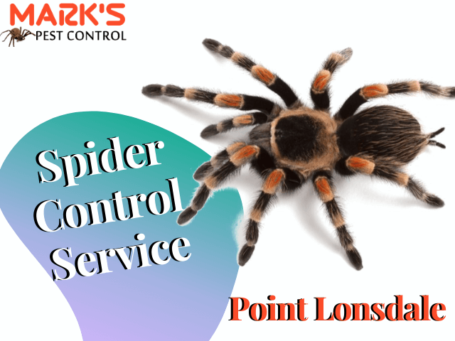 Spider Control Service- Marks Pest Control Point Lonsdale