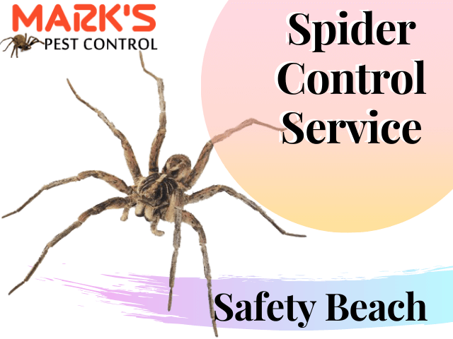 Spider Control Service in Safety Beach-Marks Pest Control Service