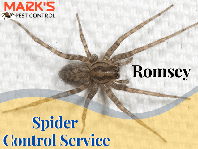 Spider Control service in Romsey-Marks Pest control