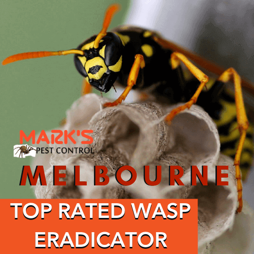 TOP RATED WASP removal an eradicator melbourne
