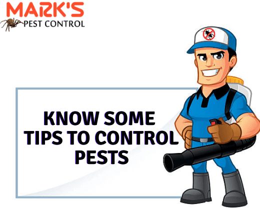 Tips to control pests-Marks Pest Control