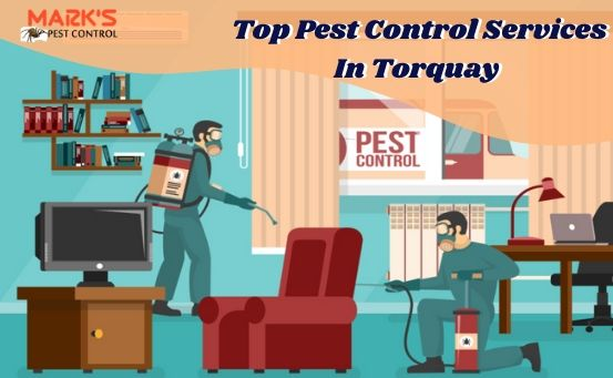 Top Pest Control Services In Torquay
