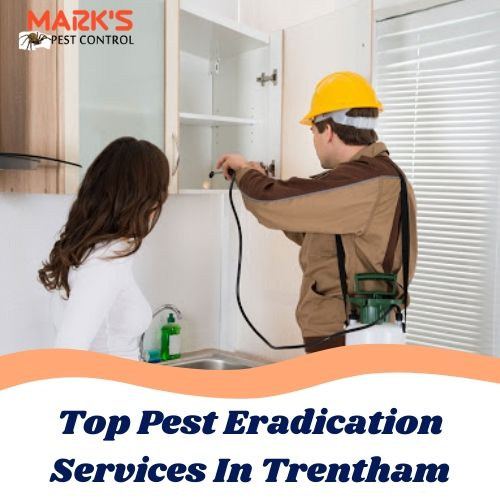 Top Pest Eradication Services In Trentham