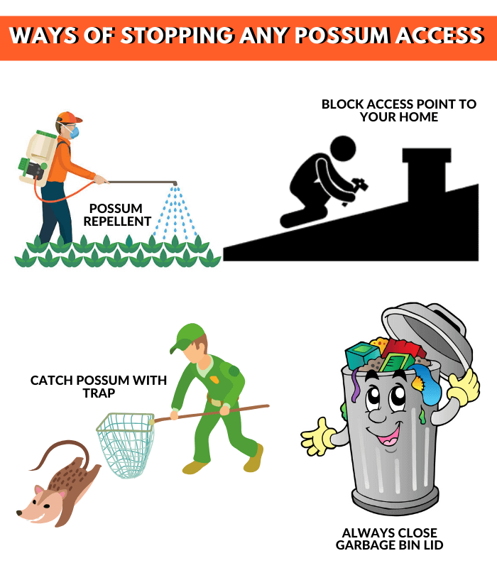 ways to stopping possum access